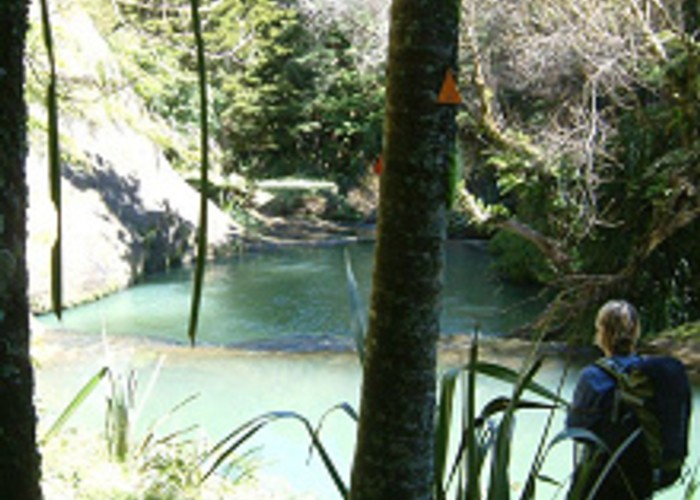 A pool in the Mokoroa stream, downstream from the falls
