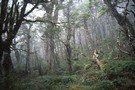 Mist in the beech forest