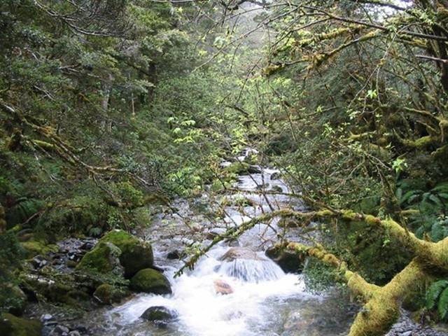 Iris Burn Valley
