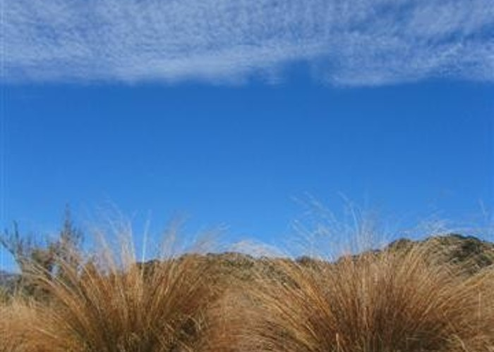 Tussock on Heaphy