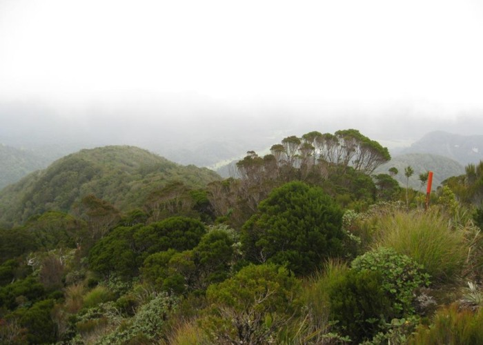 Mt Bovis tops on a misty day