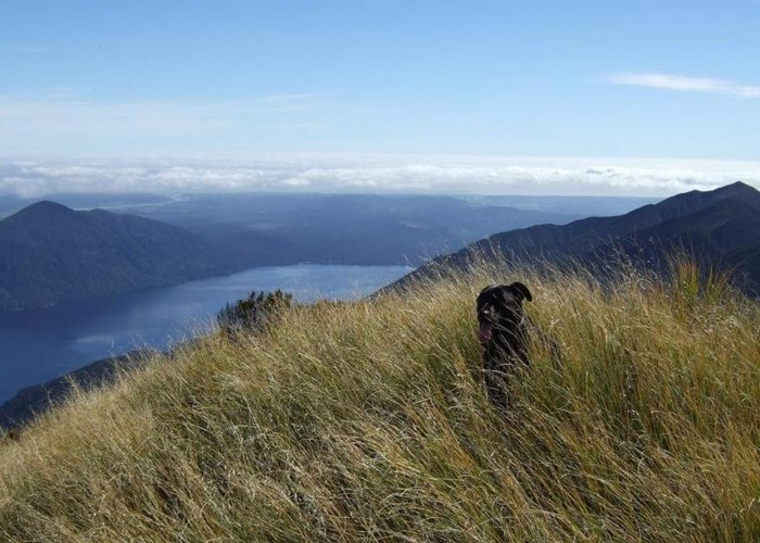 Lake Kaniere etc from top of Mt Brown  April 2011
