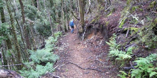 The track between Moerangi and Rogers Huts