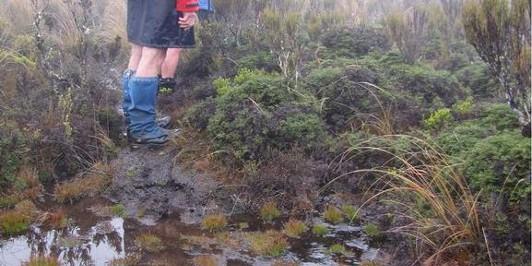 A rather damp track on Hauhungatahi