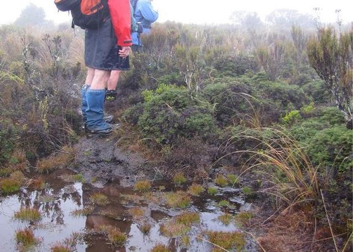 A rather damp track on Hauhungatahi