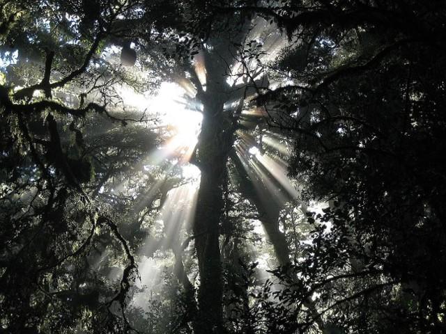 Spey valley sunlight