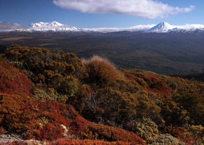 view on Mt. Ruapehu