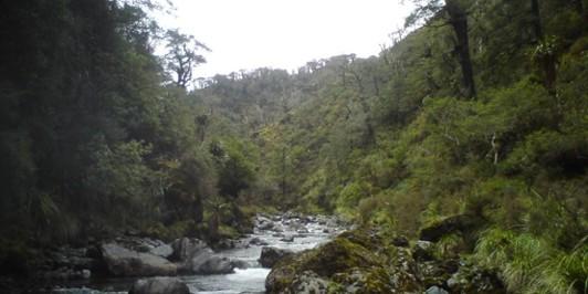 Pohongina River at Leon Kinvig hut