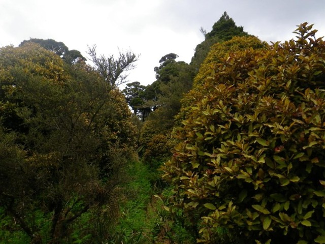 Track from Takapari Rd to Forks Hut
