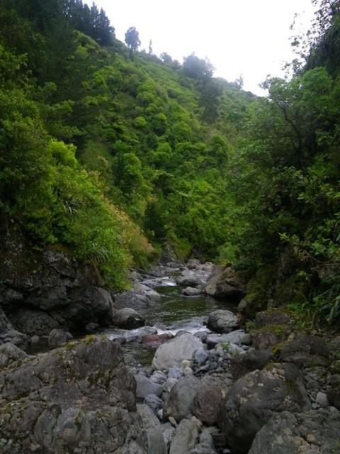 Makawakawa Stream below Diggers Hut