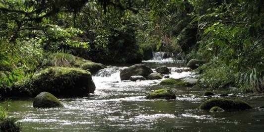 The Rapurapu Stream