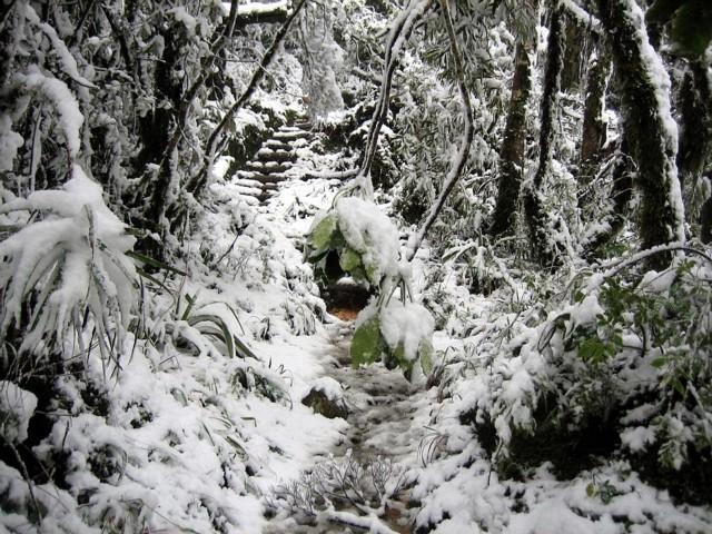 Te Aroha in the snow