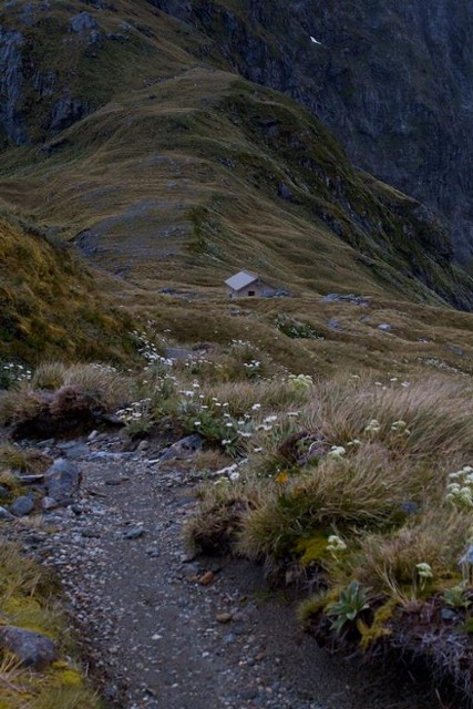Track down to MacKinnon Pass Shelter