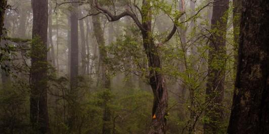 Forest near Rocks Hut