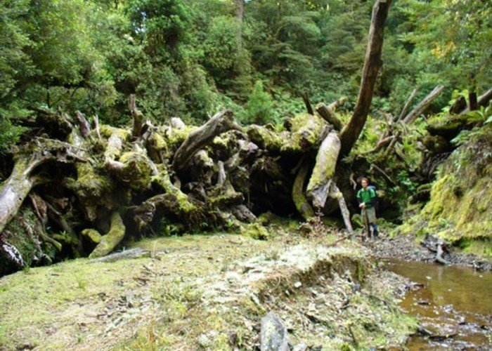 log jam, upper anini