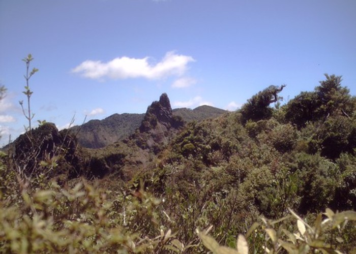 Ridge to Wahine in the Kaimais