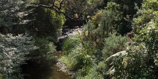 Graces Stream, Catchpool Valley