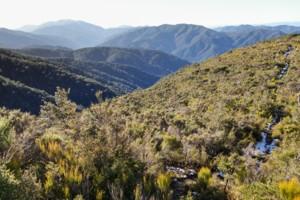 Mt Reeves Track
