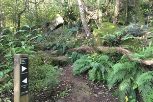 Totara Trail, Kennedys Bush