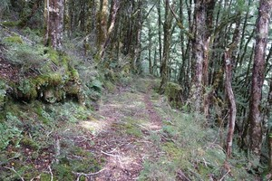 Old track near Amuri Pass