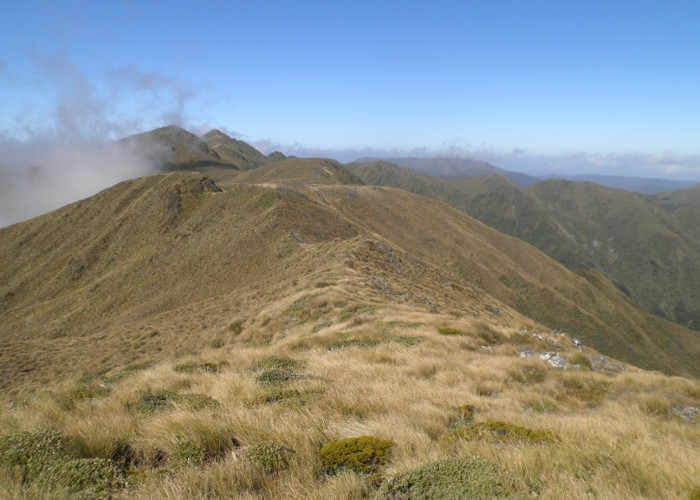 Table Top Ridge, Tararuas