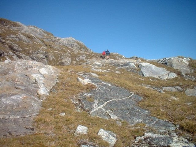 Leucosomes Above Centre Pass, Dusky Track