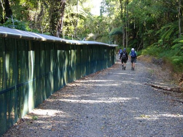 The Pest Proof fence around Maungatautari