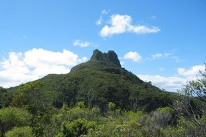 Kauaeranga Kauri Trail (Pinnacles Walk)