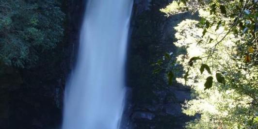 Tauranga-Taupo Falls