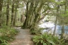 Routeburn Track and River