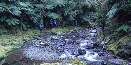 Typical Urewera Travel, Waihua Stream