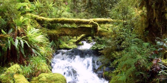 Fiordland Rainforest