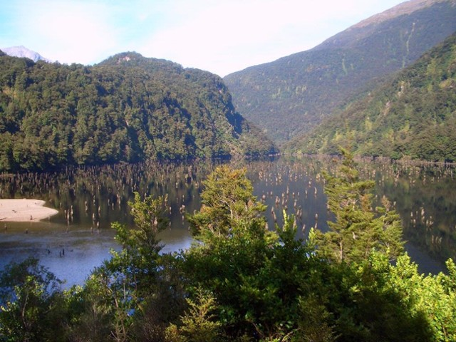 More Loch Maree treestumps