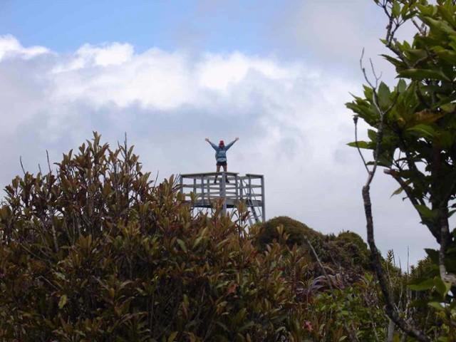 Pirongia Summit