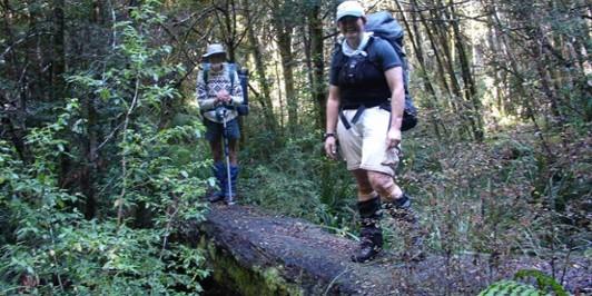The log bridge on the way to the Matakuhia Hut