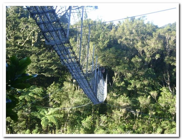 The Swingbridge over the Waiohine near Totara Flats Hut