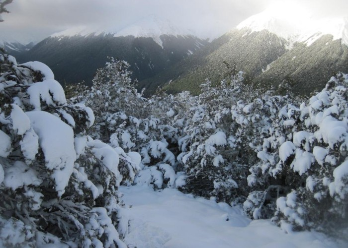 Bushline SNow at Lewis Pass