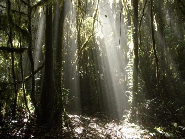 Heavenly rainforest
