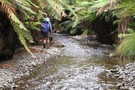 In the Kakanui Stream