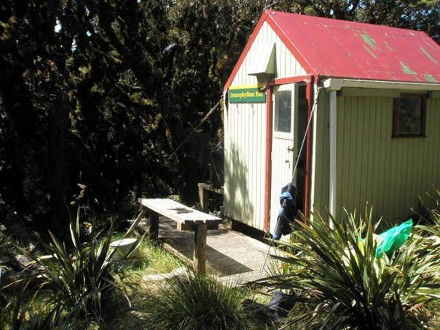 Dracophyllum Hut