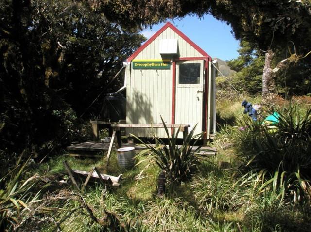 Dracophyllum Hut 1