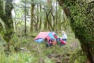 Campsite in beech forest beside the Forgotten river